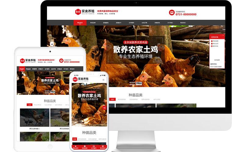 家禽养殖公司网站模板,家禽养殖公司网页模板,家禽养殖公司响应式网站模板
